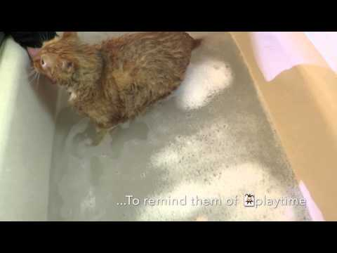 HOW TO BATH A NERVOUS CAT🙀?