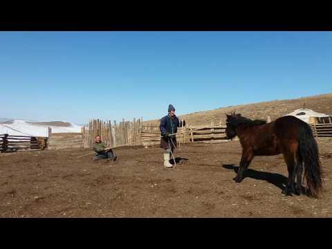 Catching a wild horse - The Zero Trip