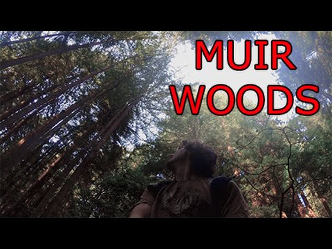 Muir Woods, San Francisco - Travel VLOG