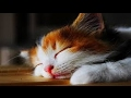 Soothing Music To Calm Agitation and Anxiety of Pets ♥♥♥ Relax and Deep Sleeping For Dogs and Cats