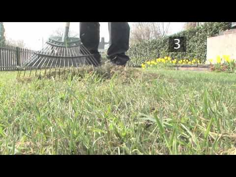 How to Care for your Lawn in Spring