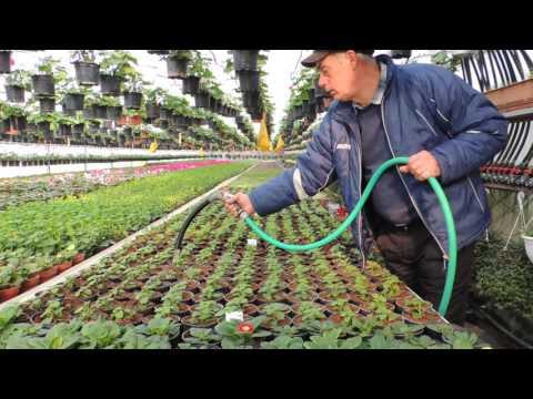 Fabrica de Plante  -   www.fabricadeplante.ro