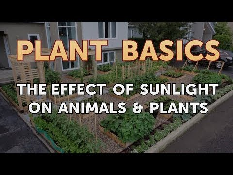 The Effect of Sunlight on Animals & Plants