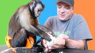 Download Monkey FUN Colorful Sand Reaction! Video