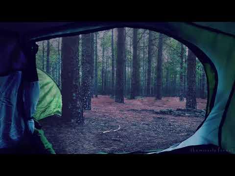 🎧 Rain on Tent Ambience   8 HOURS   Forest Rain & Thunder ASMR Soundscape