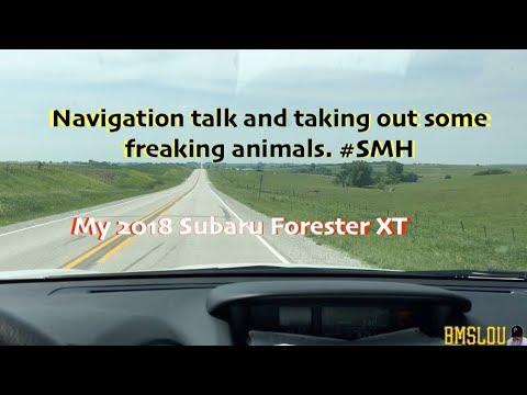My 2018 Subaru Forester XT - Talking navigation & animals #SMH