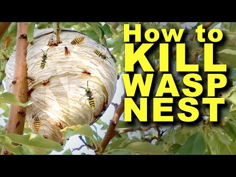 How to kill a wasp's nest