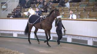 Tattersalls Guineas Breeze Up and HIT Sale 2016