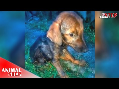 Life Is So Sad – Found A Sick Dog In Terrible Condition Waiting For Help