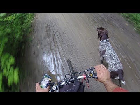 How to train dog to run along with your bicycle off leash.