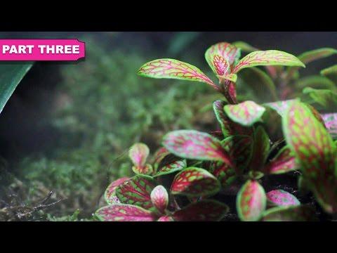 ADDING PLANTS & COMPLETING TANK | Natural Terrarium Build