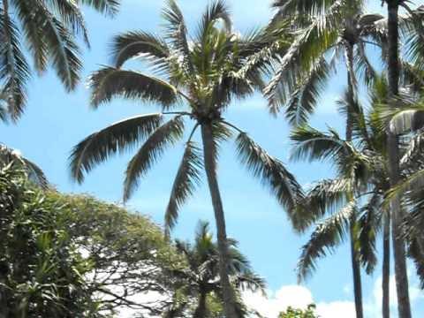 Kaneohe Bay tree trimming- 101, Shane Sanne