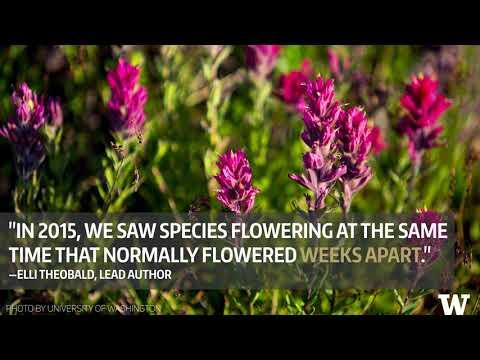 With climate change, Mount Rainier floral communities could 'reassemble'