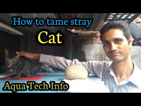 How to tame stray cat