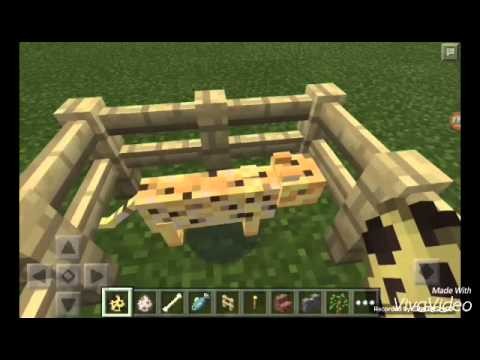 How to tame ocelots and wolves in Minecraft PE