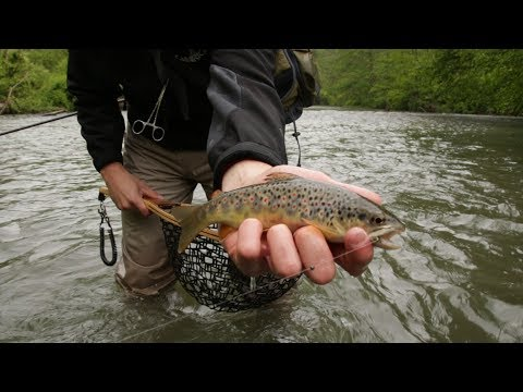 Spring Creek Fly Fishing - Allegheny Native