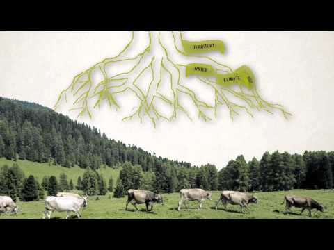 Preserve Biodiversity, Preserve the Planet