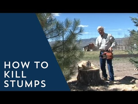 How to Kill Stumps