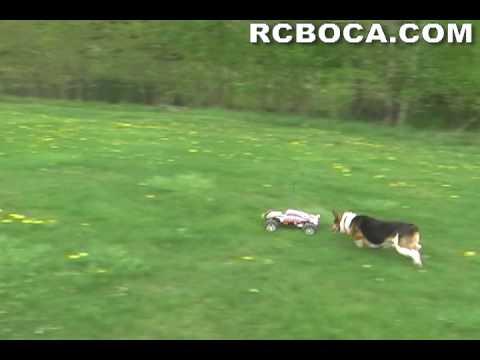 Traxxas Rustler RC Truck VS 4 Dogs