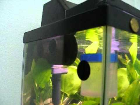 inexpensive Inventions to make your fish tank look 'ice'