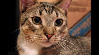 Most Docile Cat EVER; RIDDICK!