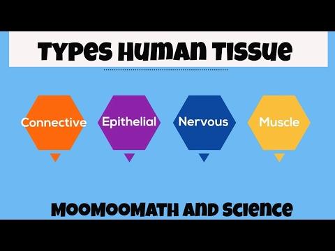 Types of Human Body Tissue