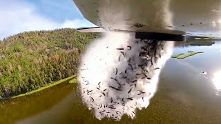 They Drop Fish From Plane Into Lakes, And Here's Why