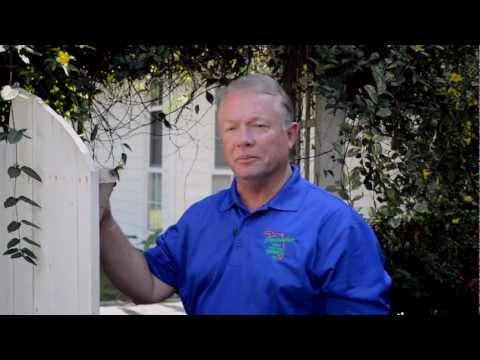 See Termites Swarming & learn inexpensive ways to keep them out of your home!