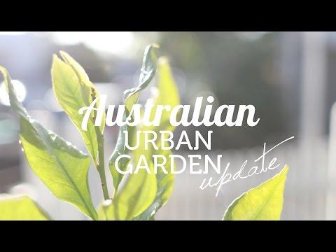 Australian Urban Garden Update December 2016