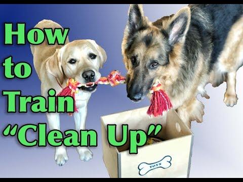 Dog Training Tutorial: