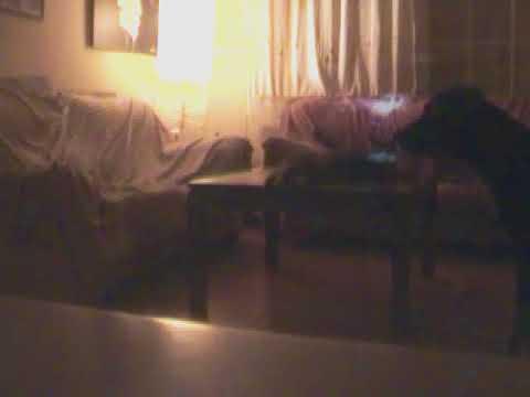 sofà destroçat ràpid