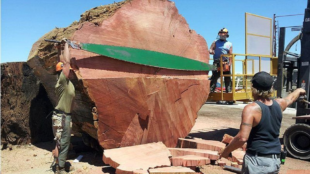 Amazing Fastest Large Wood Sawmill Machines Working, Modern Operated  Sawmills in The Country