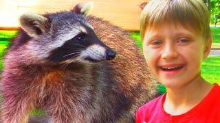 Download Влог Игорь и Арина нашли Енотов на детской площадке | Видео для детей Video