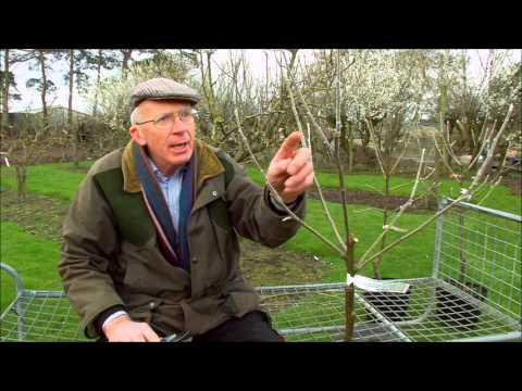 How to Prune Young Fruit Trees