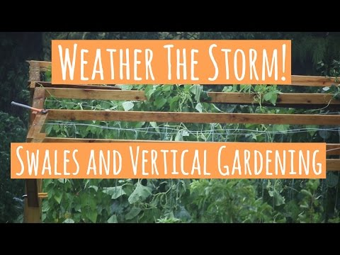 WEATHERING THE STORM WITH VERTICAL GARDENING/SWALES