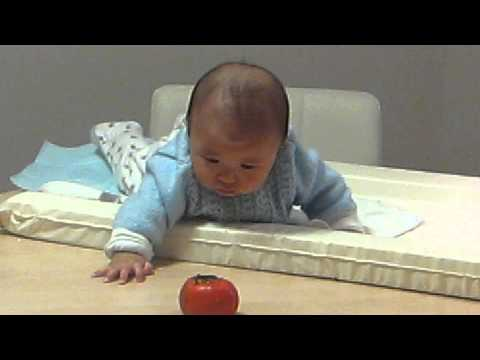 Baby William reaching for persimmon fruit