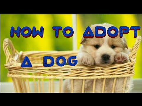 How to   adopt a dog Online  in all over India .....