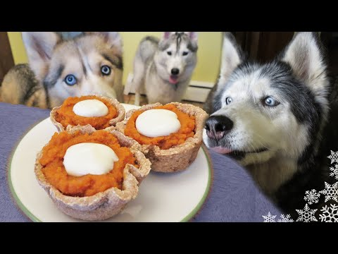 DIY PUMPKIN PIE FOR DOGS | Dog Treat Recipe for Thanksgiving | Snow Dogs Snacks 29