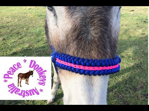 Sanctified modified centre chain noseband for rope horse halter