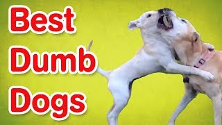 Dumb Dogs | Funny Dog Compilation