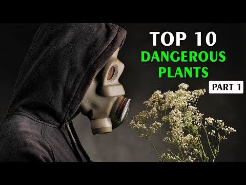 Top 10 Most Dangerous Plants In The World Part - 1   Vlog#28 by HooplakidzLab