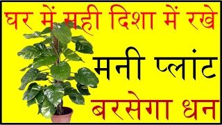 घर में सही दिशा में रखे मनी प्लांट बरसेगा धन money plant direction according to vastu