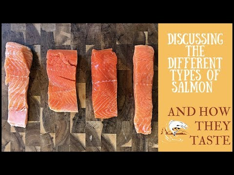 Tasting & Talking About The Different Types of Salmon