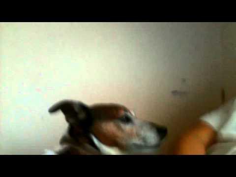 dog with encredabul  pointy ears!!!!!!!!!!!!!!!!!!!!!!!!!!!!!!!!!!!!!!!!!!!!