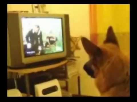 Mat watches tv.wmv