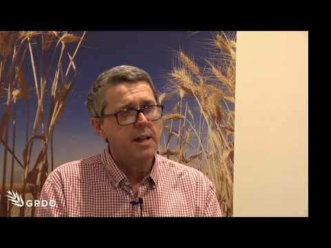 Greg Rebetzke discusses delivery of weed competitive wheats to growers, at Adelaide GRDC Update