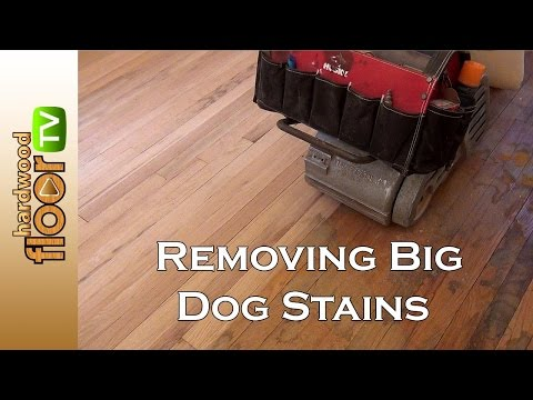Remove Big Dog Pet Stains In Hardwood Floors