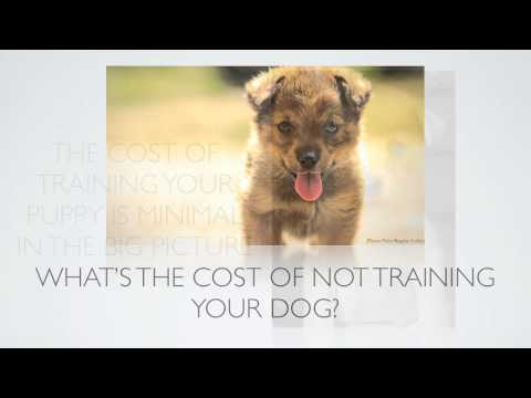 [Puppy Training Tips] How Much Does Puppy Training Cost?