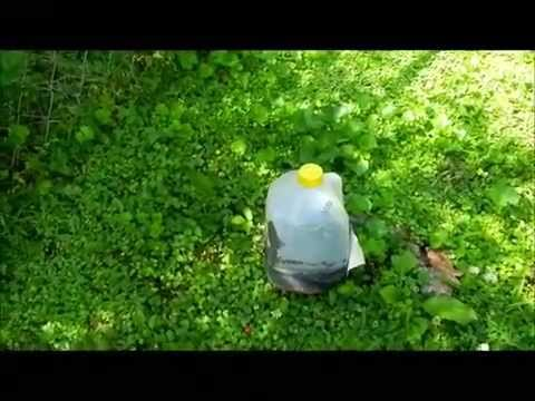 How to Dispose a Homemade Fly Trap