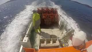 Krepsefiske ombord i Eldjarn. Crayfish aboard Eldjarn.